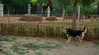 dog park change_002