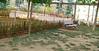 dog park change_001