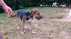 Linda (puppy)_001
