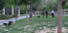 Dog Park03
