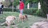 Dog Park07