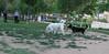 Dog Park04