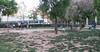Dog Park12