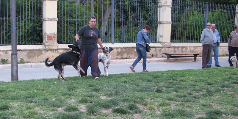 Dog Park01