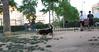 Dog Park09