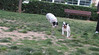 Dog Park06