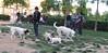 Dog Park08