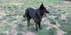Aitana  ( 3 yr old girl)