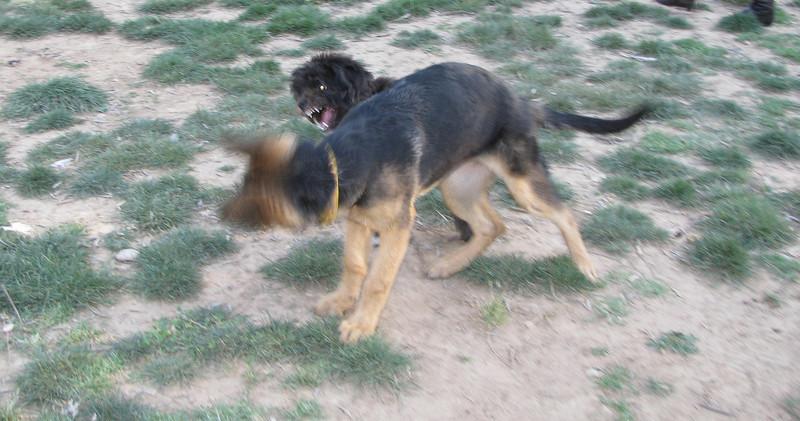Coco (pup), Tina (pup)