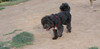 Coco (pup boy)