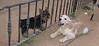 Bruce, Badi (puppies)