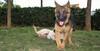 Bruce (puppy), Tina (puppy)