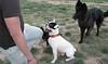 audrey, french, bulldog, Aitana, West