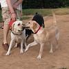 Angel (guide), Kora (puppy)