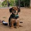ayora park dogs04