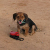 ayora park dogs02