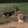ayora park dogs01