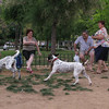 Ayora Dog Park01