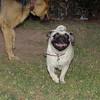 Carlina (new pup girl)_001