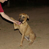 LULA (lost girl, adopt)_002