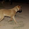 LULA (lost girl, adopt)_010