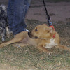Duna ( puppy girl)_002