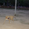Duna ( puppy girl)_001