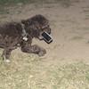 Coco (pup boy)_002