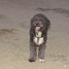 Coco (pup boy)_001