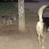 Chulo (new puppy), maddie,_005