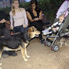 Chulo (new puppy), maddie,_004