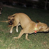 Duna puppy girl), Zeus, Woton_001