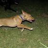 Aimar (4m, puppy girl)_005