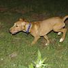Aimar (4m, puppy girl)_006