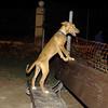 Aimar (4m, puppy girl)_008