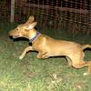 Aimar (4m, puppy girl)_003