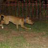 Aimar (4m, puppy girl)_004
