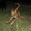 Aimar (4m, puppy girl)_007