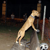 Aimar (4m, puppy girl)_009