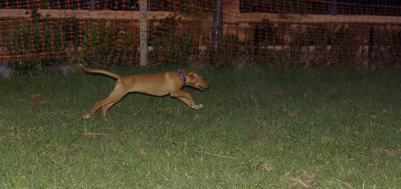 Aimar (4m, puppy girl)_001