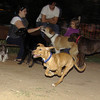 Aimar (4m, puppy girl)_002