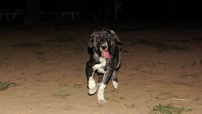 Luna (new puppy girl)_004