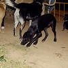 FIFTY (puppy boy)_001