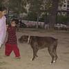 Dana, Pakistani, girls, children, people, ayora