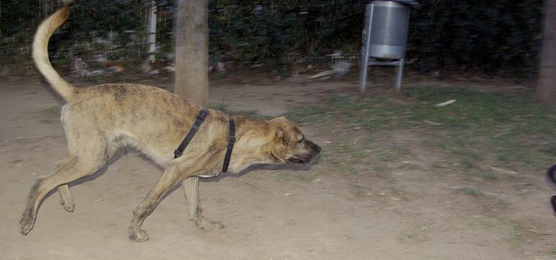 Angus (boy dog)_001