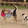 Dana, Maddie, costume, cowgirl, ayora