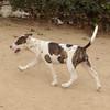 Dana 2 (new puppy girl)_001