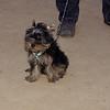 Cody (new puppy boy)_002