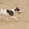 Dana 2 (new puppy girl)_002