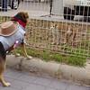 Maddie, costume, cowgirl, ayora, look, queen, walk, cat